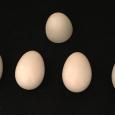 Thayer Multiplying Eggs