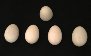 Thayer Multiplying Eggs